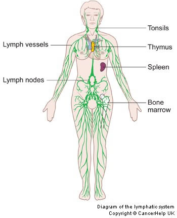 About Lymphoma | Hodgkin Lymphoma and Non-Hodgkin Lymphoma